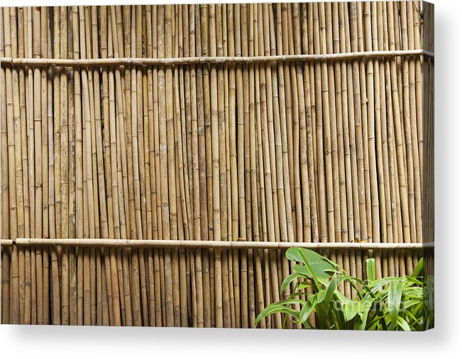 Architectural Detail Acrylic Print featuring the photograph Bamboo Fence by Don Mason