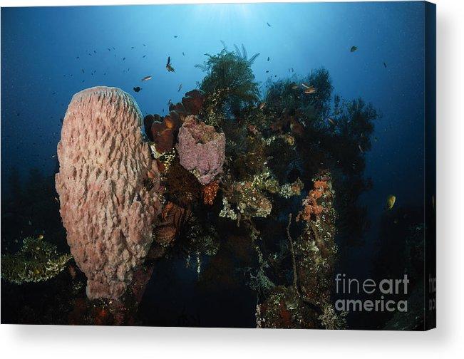 Liberty Wreck Acrylic Print featuring the photograph Barrel Sponge On Liberty Wreck, Bali by Todd Winner