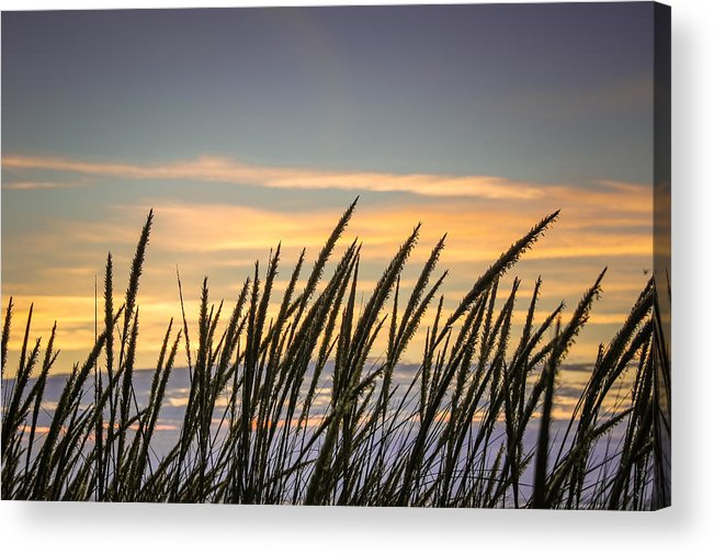 Beach Acrylic Print featuring the photograph Beach Grass by Bill Pevlor