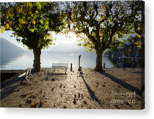 Bench Acrylic Print featuring the photograph Bench And Trees On The Lake Front by Mats Silvan