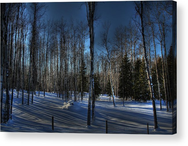 Birch Acrylic Print featuring the photograph Birch Shadows by Kim French