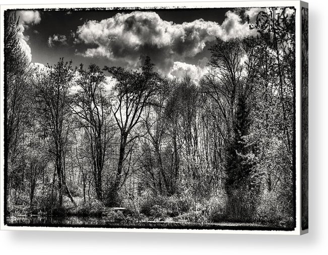 Pond Acrylic Print featuring the photograph Brook Lake In The West Hylebos Wetlands by David Patterson