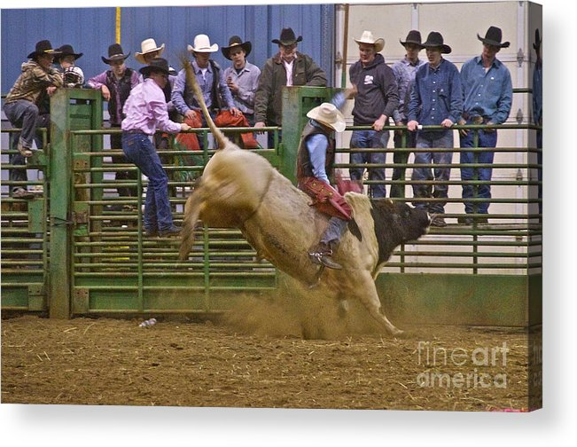 Photography Acrylic Print featuring the photograph Bull Rider 2 by Sean Griffin