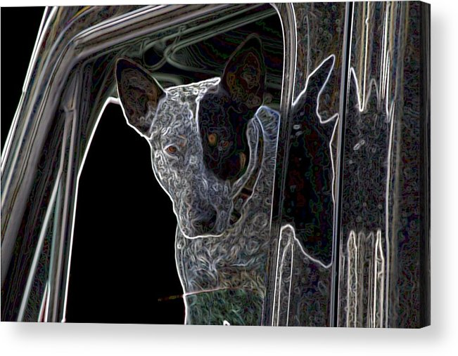 Bull Terrier Acrylic Print featuring the photograph Bull Terrier by One Rude Dawg Orcutt