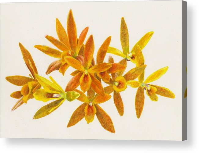 Orchid Acrylic Print featuring the photograph Butterfly Kisses by Steve Asbell