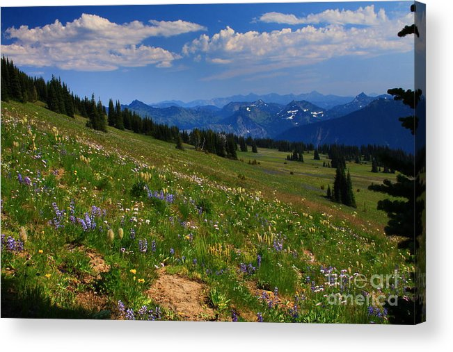 Mountain Acrylic Print featuring the photograph Cascades And Wildflowers by Angela Q