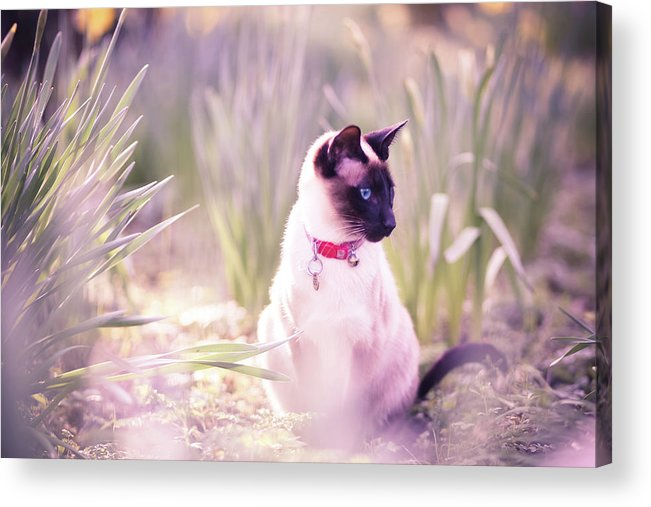 Horizontal Acrylic Print featuring the photograph Cat Sitting By Daffodils by Sasha Bell