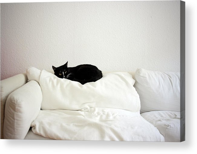 Horizontal Acrylic Print featuring the photograph Catheaven by Licensed Material