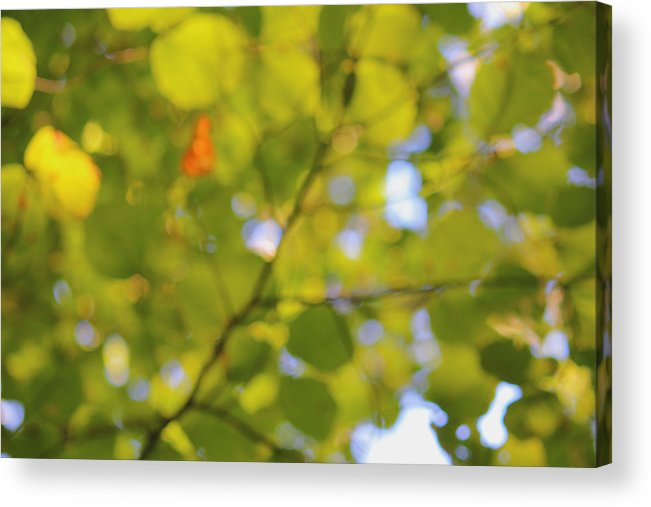 Abstract Photography Acrylic Print featuring the photograph Chlorophyll Daydream by Andrew Pacheco