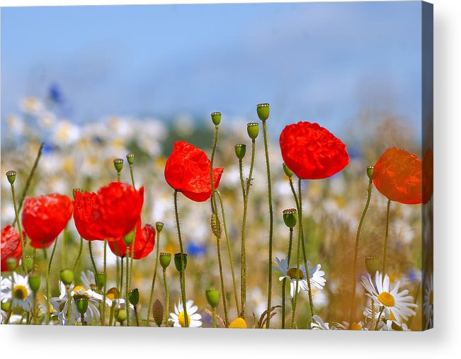 Summer Acrylic Print featuring the photograph Colour Of Summer by Stuart Jack