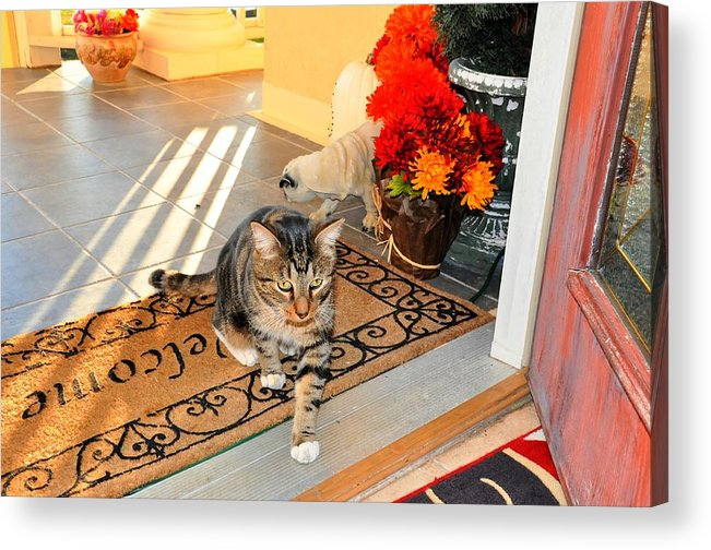 Cat Acrylic Print featuring the digital art Coming In by Barry R Jones Jr