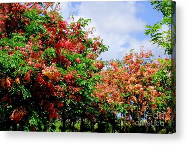 Coral Acrylic Print featuring the photograph Coral Shower Trees by Mary Deal