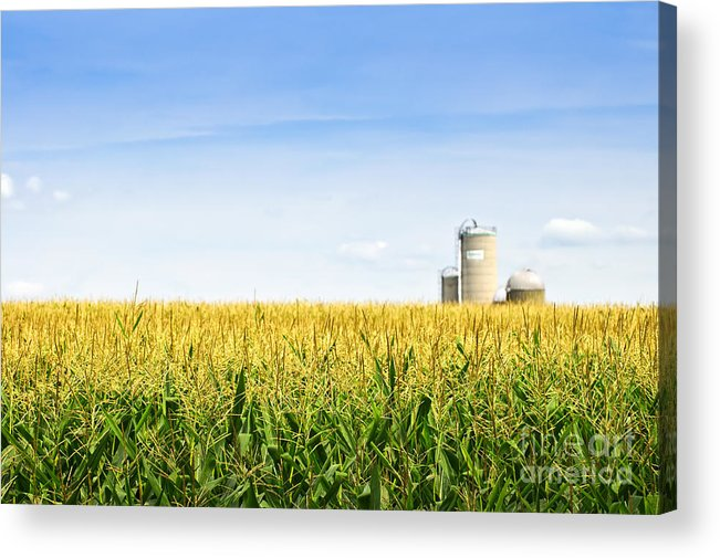 Agriculture Acrylic Print featuring the photograph Corn Field With Silos by Elena Elisseeva