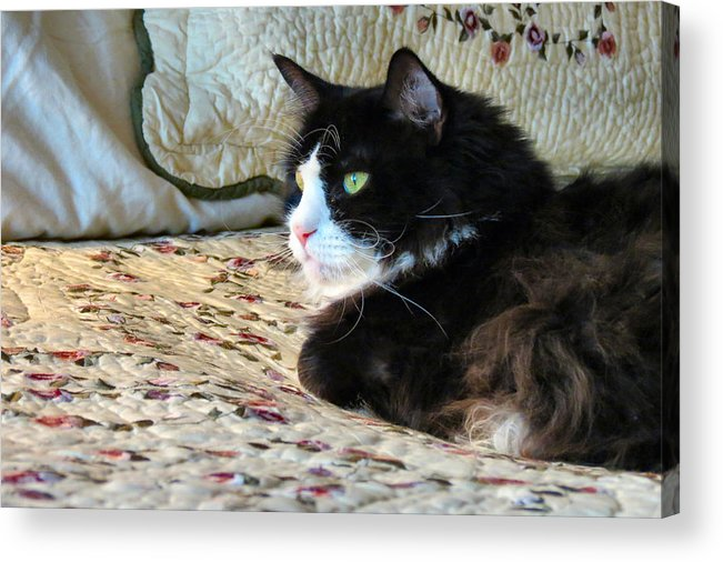 Cat Acrylic Print featuring the photograph Country Kitty by Art Dingo