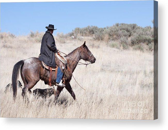 Cowboy Acrylic Print featuring the photograph Cowboy On Horseback by Cindy Singleton