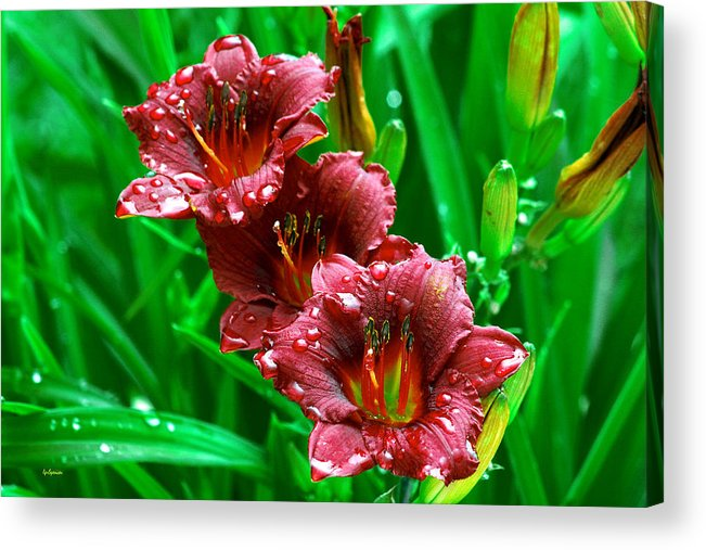 Flowers Acrylic Print featuring the photograph Crimson Lilies In April Shower by Lisa Spencer