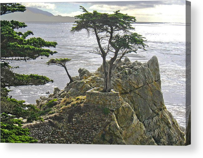 Travel Acrylic Print featuring the photograph Cypress Monterey Ca by Marie Morrisroe