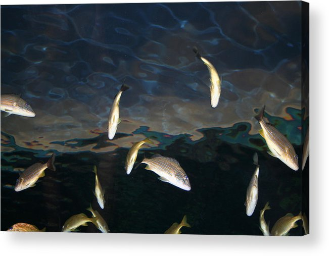 Fish Acrylic Print featuring the photograph Dancing Below by Cyndi Brewer