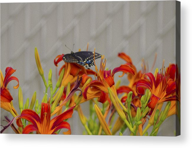 Flower Acrylic Print featuring the photograph Daylily Butterfly by Michel DesRoches