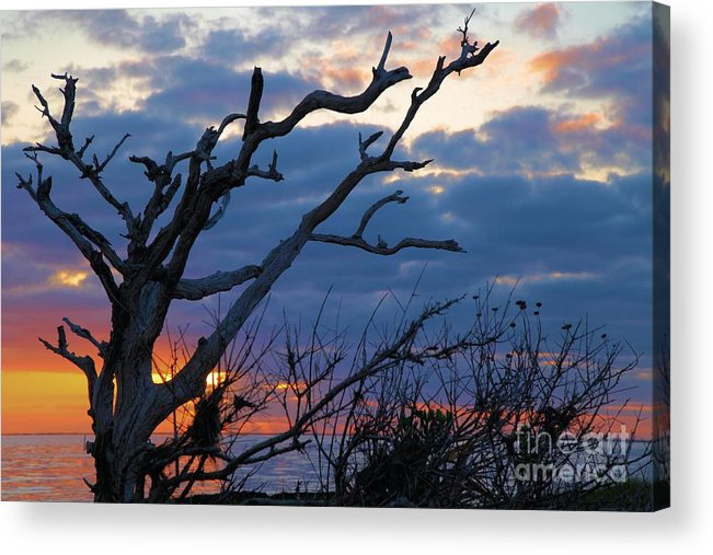 North Carolina Outer Banks Acrylic Print featuring the photograph Dead Trees At Sunrise by Adam Jewell