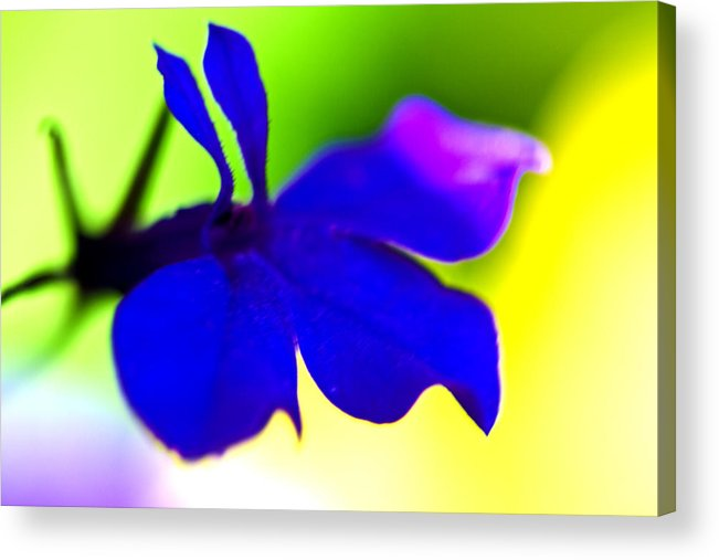 Blue Flower Acrylic Print featuring the photograph Deeply Blue by Marie Jamieson
