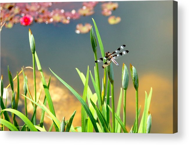 Dragonfly Acrylic Print featuring the photograph Dragonfly by Christine Tobolski
