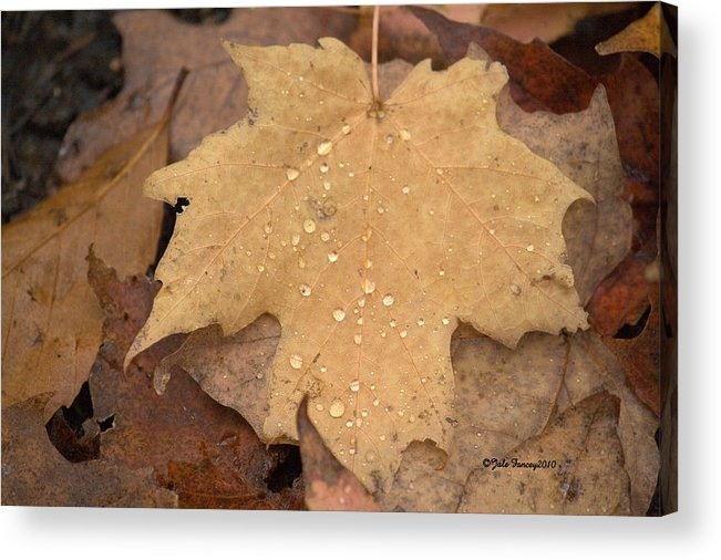 Maple Leaf Acrylic Print featuring the photograph Drops On A Golden Leaf by Jale Fancey