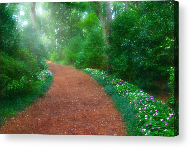 Early Acrylic Print featuring the photograph Early Morning Garden Walk by Cindy Haggerty