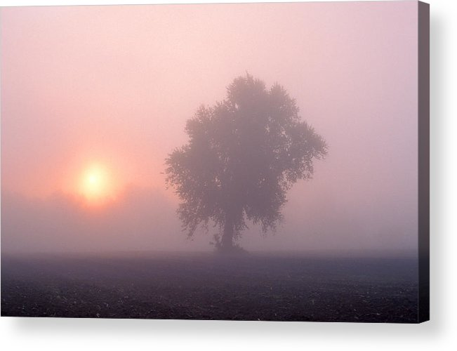 Mist Acrylic Print featuring the photograph Early Morning Mist by Larry Landolfi