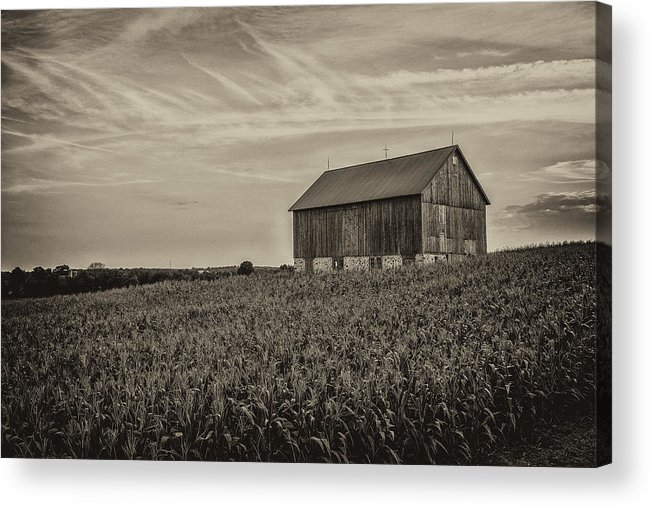 Cj Schmit Acrylic Print featuring the photograph Ears In The Field by CJ Schmit