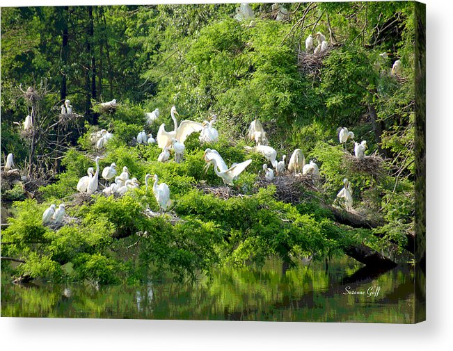 Egret Acrylic Print featuring the photograph Egret Estuary by Suzanne Gaff