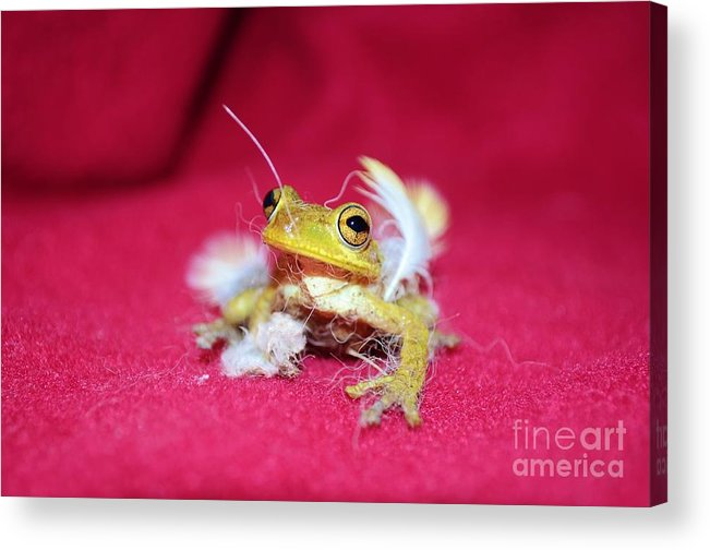 Frog Acrylic Print featuring the photograph Ever Have One Of Those Days by Lynda Dawson-Youngclaus