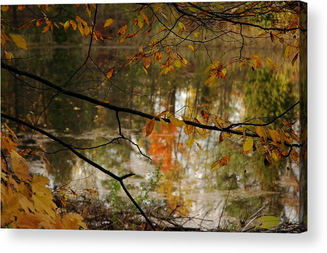 Usa Acrylic Print featuring the photograph Fall River Branches by LeeAnn McLaneGoetz McLaneGoetzStudioLLCcom