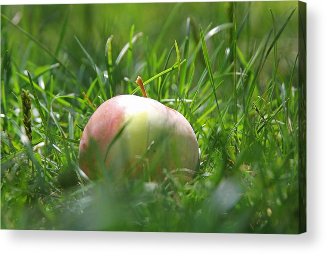 Apple Acrylic Print featuring the photograph Fallen by Julie Wall