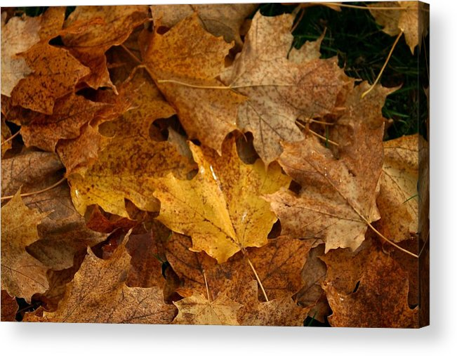 Leaves Acrylic Print featuring the photograph Fallen Leaves by Vincent Duis