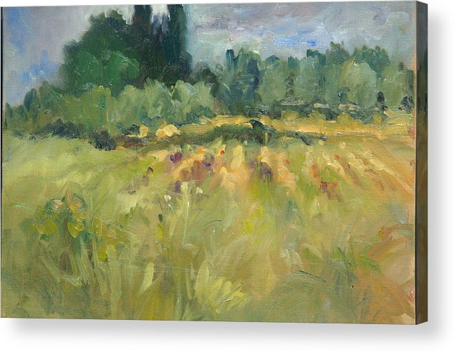 Trees Green Olive Trees Vineyard Italy Plein Air Acrylic Print featuring the painting Field In Italy by Elizabeth Taft
