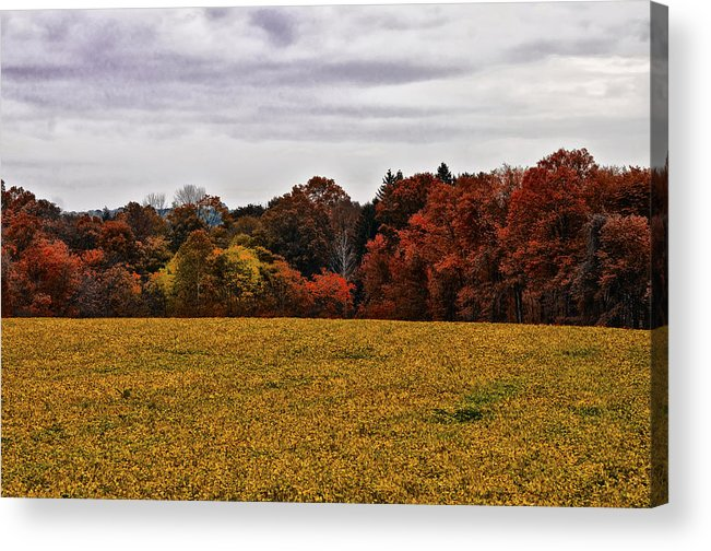 Fields Of Gold Acrylic Print featuring the photograph Fields Of Gold by Bill Cannon