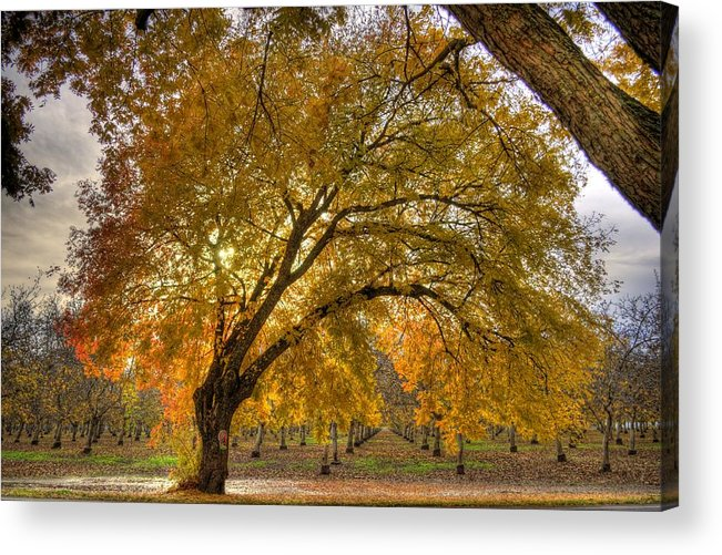 Leaves Acrylic Print featuring the photograph Fire Tree by Ren Alber