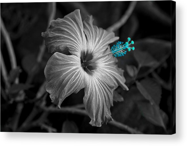 Flower Acrylic Print featuring the photograph Flower 1 by Burney Lieberman