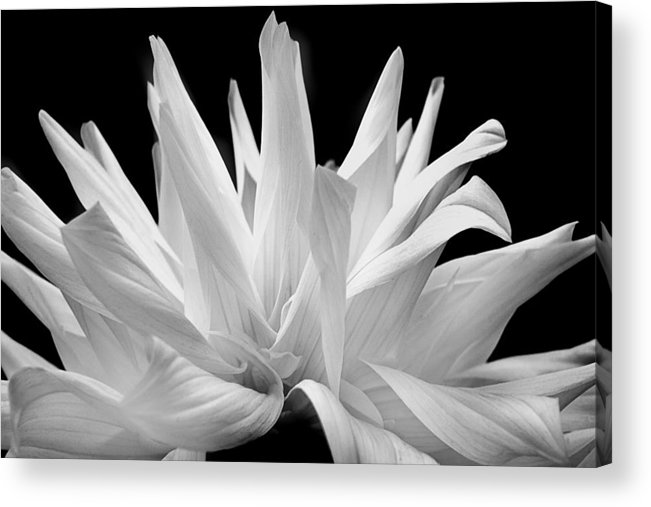 White Flower Acrylic Print featuring the photograph Flower 11 by Burney Lieberman
