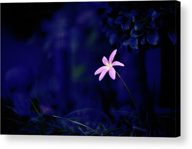 Horizontal Acrylic Print featuring the photograph Flower by Moaan