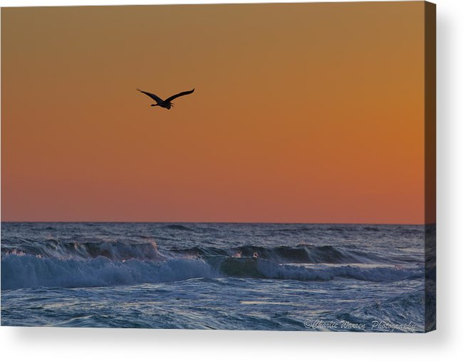 Beach Acrylic Print featuring the photograph Fly By by Charles Warren