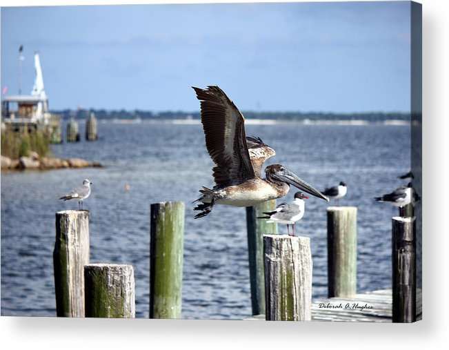 Pelicans Acrylic Print featuring the photograph Fly By by Deborah Hughes