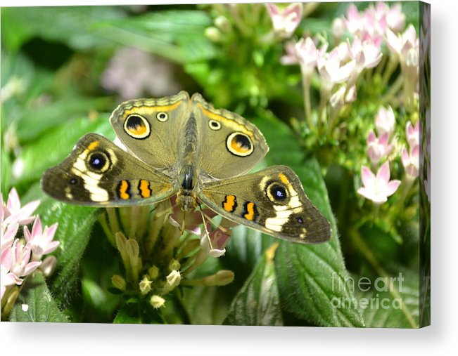 Butterfly Acrylic Print featuring the photograph Four Eyes by Bella Photography