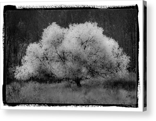 Appalachia Acrylic Print featuring the photograph Ghost Tree by Debra and Dave Vanderlaan