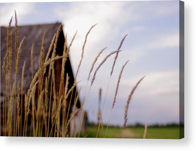 Farm Acrylic Print featuring the photograph Glancing Back At A Memory by Kelly Reich