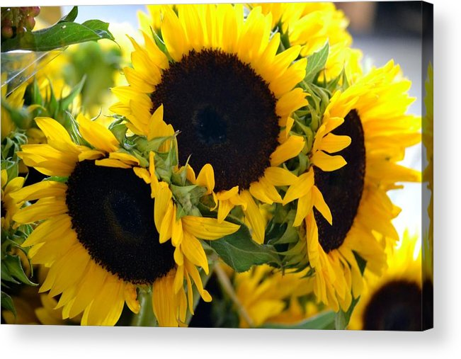 Sunflower Acrylic Print featuring the photograph Glow by Monica Lyons