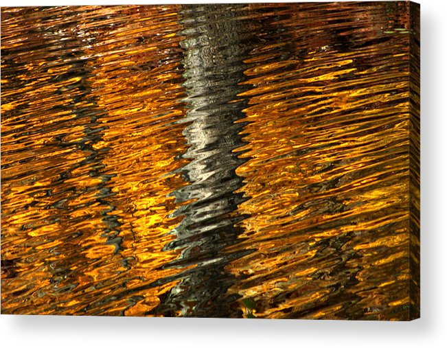 Gold Acrylic Print featuring the photograph Gold Reflection by Emanuel Tanjala