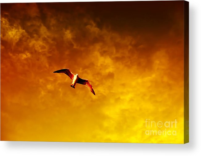 Flight Acrylic Print featuring the photograph Golden Flight by Nilay Tailor