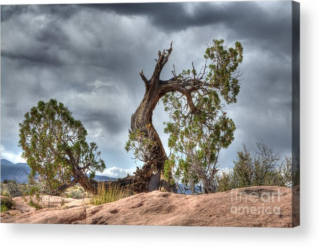 Grand Canyon Acrylic Print featuring the photograph Grand Canyon Facing The Storm by Bob Christopher
